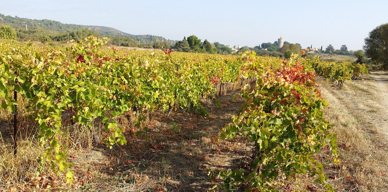 Vinmarker i oktober